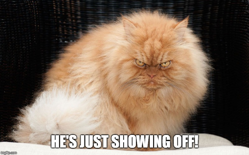 mean cat | HE'S JUST SHOWING OFF! | image tagged in mean cat | made w/ Imgflip meme maker