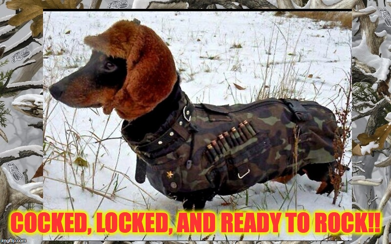 Let's Rock!! | COCKED, LOCKED, AND READY TO ROCK!! | image tagged in hunting doggo | made w/ Imgflip meme maker