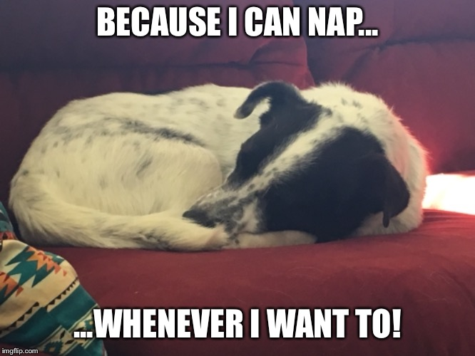 A Dig's Life | BECAUSE I CAN NAP... ...WHENEVER I WANT TO! | image tagged in nap | made w/ Imgflip meme maker