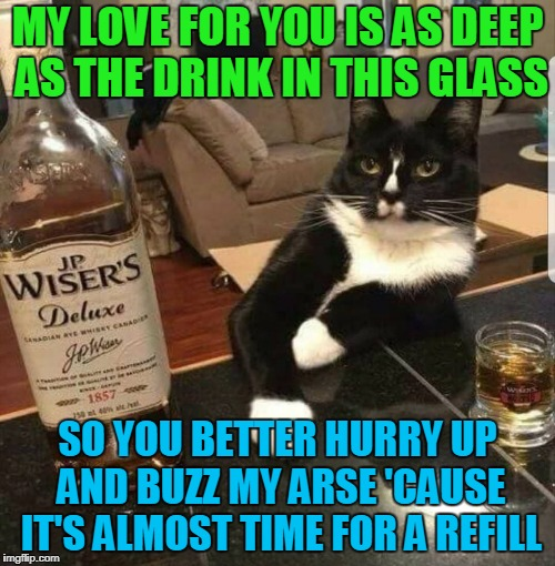romance is nice, but liquor is quicker | MY LOVE FOR YOU IS AS DEEP AS THE DRINK IN THIS GLASS SO YOU BETTER HURRY UP AND BUZZ MY ARSE 'CAUSE IT'S ALMOST TIME FOR A REFILL | image tagged in memes,cat,alcohol,drinking,romance,drunk cat | made w/ Imgflip meme maker