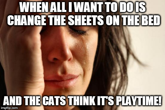 First World Problems Meme | WHEN ALL I WANT TO DO IS CHANGE THE SHEETS ON THE BED AND THE CATS THINK IT'S PLAYTIME! | image tagged in memes,first world problems | made w/ Imgflip meme maker