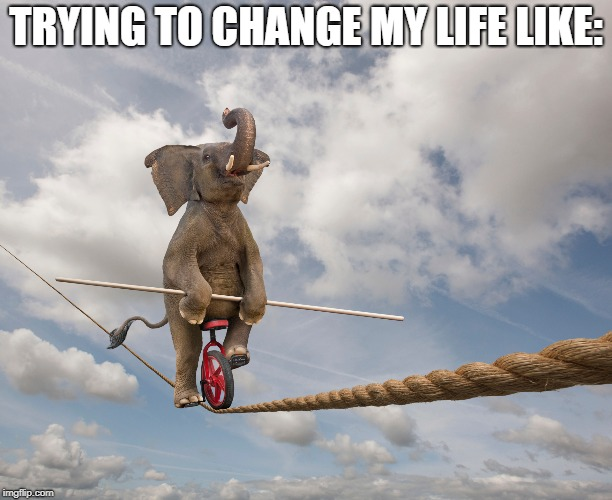 Elephant On Tightrope | TRYING TO CHANGE MY LIFE LIKE: | image tagged in change,trying,my,life | made w/ Imgflip meme maker
