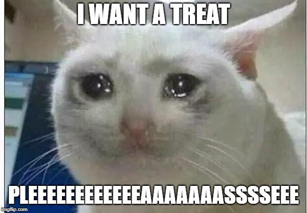 crying cat | I WANT A TREAT PLEEEEEEEEEEEEAAAAAAASSSSEEE | image tagged in crying cat | made w/ Imgflip meme maker
