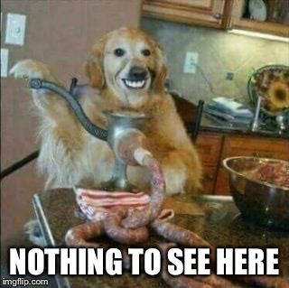 Sausage Dog | NOTHING TO SEE HERE | image tagged in sausage dog | made w/ Imgflip meme maker