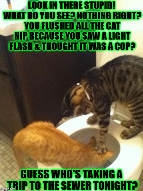 LOOK IN THERE STUPID! WHAT DO YOU SEE? NOTHING RIGHT? YOU FLUSHED ALL THE CAT NIP BECAUSE YOU SAW A LIGHT FLASH & THOUGHT IT WAS A COP? GUES | image tagged in paranoid stoner | made w/ Imgflip meme maker