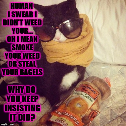 HUMAN I SWEAR I DIDN'T WEED YOUR... OH I MEAN SMOKE YOUR WEED OR STEAL YOUR BAGELS WHY DO YOU KEEP INSISTING IT DID? | image tagged in stoned  clueless | made w/ Imgflip meme maker