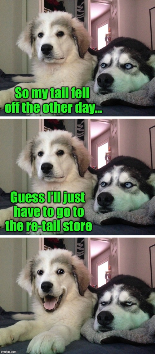 Dang, I haven't seen this meme template being used in a while... | So my tail fell off the other day... Guess I'll just have to go to the re-tail store | image tagged in bad pun dogs,retail,dog,tail | made w/ Imgflip meme maker
