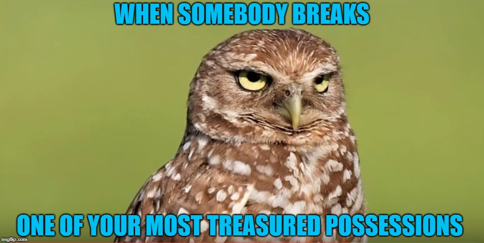 Death Stare Owl | WHEN SOMEBODY BREAKS ONE OF YOUR MOST TREASURED POSSESSIONS | image tagged in death stare owl,memes,doctordoomsday180,break,funny,meme | made w/ Imgflip meme maker