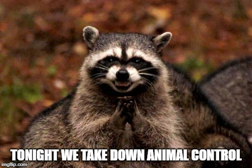 Evil Plotting Raccoon | TONIGHT WE TAKE DOWN ANIMAL CONTROL | image tagged in memes,evil plotting raccoon | made w/ Imgflip meme maker