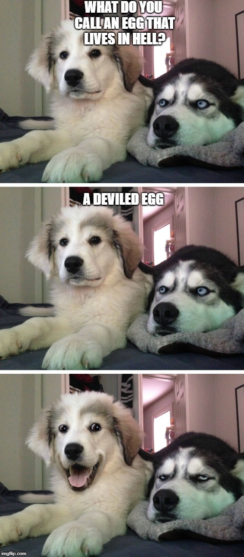 Dad joke dogs making jokes about eggs | WHAT DO YOU CALL AN EGG THAT LIVES IN HELL? A DEVILED EGG | image tagged in bad pun dogs | made w/ Imgflip meme maker