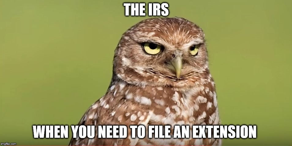 Death Stare Owl | THE IRS WHEN YOU NEED TO FILE AN EXTENSION | image tagged in death stare owl,taxes | made w/ Imgflip meme maker