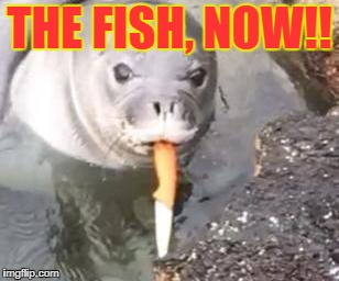 bad seal | THE FISH, NOW!! | image tagged in mad seal | made w/ Imgflip meme maker