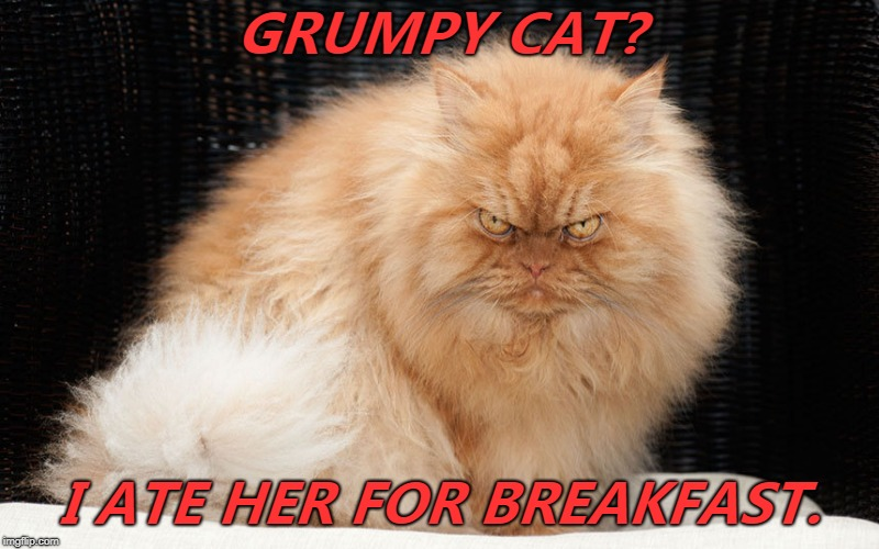 Reposting to correct! Grumpy cat is just an angry feminist!  That explains A LOT!  Worry not! Angry cat ate HER for breakfast! | GRUMPY CAT? I ATE HER FOR BREAKFAST. | image tagged in bigger and better grumpy cat,angry cat,memes,grumpy cat is an angry feminist | made w/ Imgflip meme maker