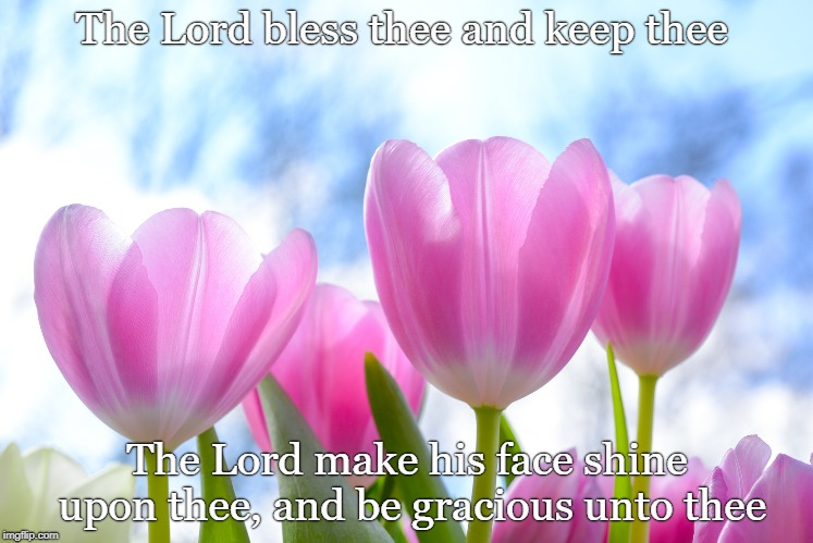 Blessings | The Lord bless thee and keep thee The Lord make his face shine upon thee, and be gracious unto thee | image tagged in bless,scripture,tulips | made w/ Imgflip meme maker
