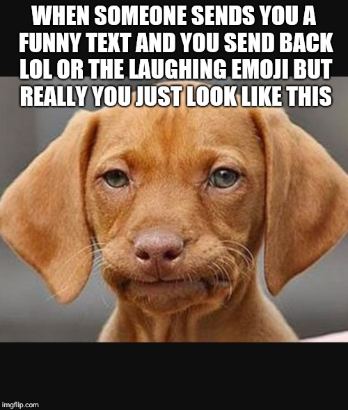 WHEN SOMEONE SENDS YOU A FUNNY TEXT AND YOU SEND BACK LOL OR THE LAUGHING EMOJI BUT REALLY YOU JUST LOOK LIKE THIS | image tagged in straight face dog | made w/ Imgflip meme maker