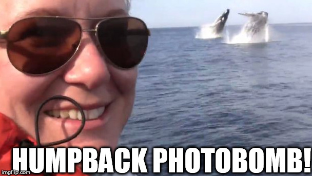 HUMPBACK BEEOTCH!! | HUMPBACK PHOTOBOMB! | image tagged in photobomb | made w/ Imgflip meme maker
