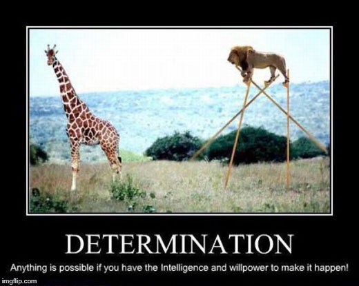 Determination | image tagged in demotivationals,lion,determination | made w/ Imgflip meme maker
