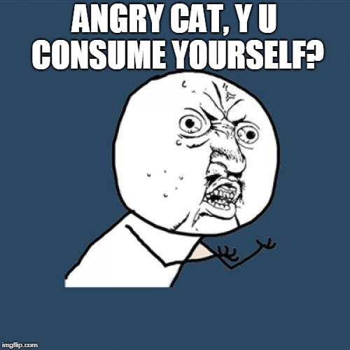 Y U No Meme | ANGRY CAT, Y U CONSUME YOURSELF? | image tagged in memes,y u no | made w/ Imgflip meme maker