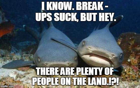 Dr. Phil Shark | I KNOW. BREAK - UPS SUCK, BUT HEY. THERE ARE PLENTY OF PEOPLE ON THE LAND.!?! | image tagged in empathetic shark | made w/ Imgflip meme maker