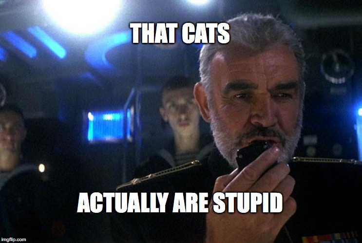 Ramius intercom | THAT CATS ACTUALLY ARE STUPID | image tagged in ramius intercom | made w/ Imgflip meme maker