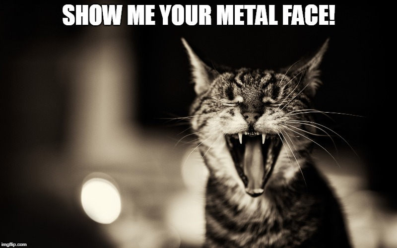 cat | SHOW ME YOUR METAL FACE! | image tagged in cat | made w/ Imgflip meme maker