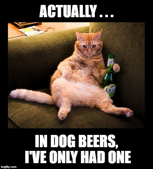 Who's counting?  Have another... | ACTUALLY . . . IN DOG BEERS, I'VE ONLY HAD ONE | image tagged in funny memes,cat,beer,dogs,drinking | made w/ Imgflip meme maker