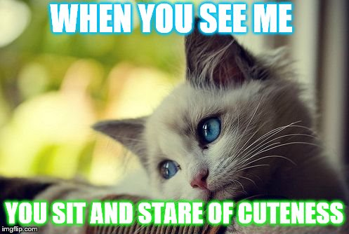 First World Problems Cat | WHEN YOU SEE ME YOU SIT AND STARE OF CUTENESS | image tagged in memes,first world problems cat | made w/ Imgflip meme maker