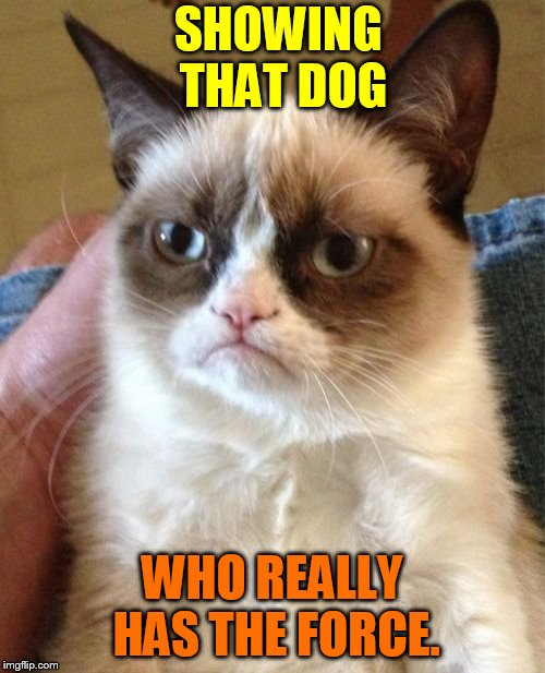 Grumpy Cat Meme | SHOWING THAT DOG WHO REALLY HAS THE FORCE. | image tagged in memes,grumpy cat | made w/ Imgflip meme maker