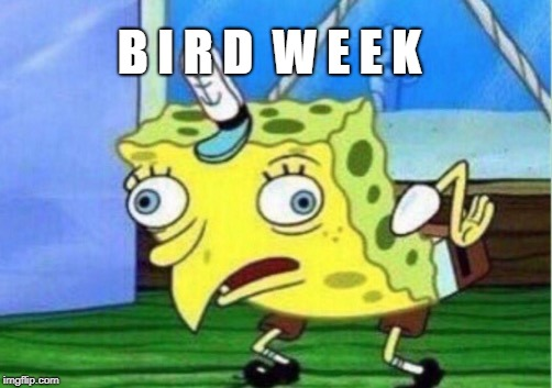 Bird Week, April 20-27, a What_Is_A_Family_Undertale event | B I R D  W E E K | image tagged in memes,mocking spongebob,bird week,spongebob,dashhopes,raydog | made w/ Imgflip meme maker