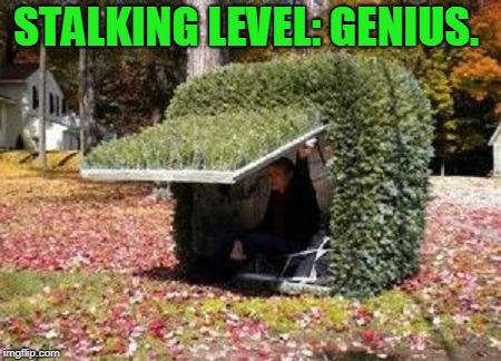 hiding in a bush | STALKING LEVEL: GENIUS. | image tagged in hiding in a bush | made w/ Imgflip meme maker