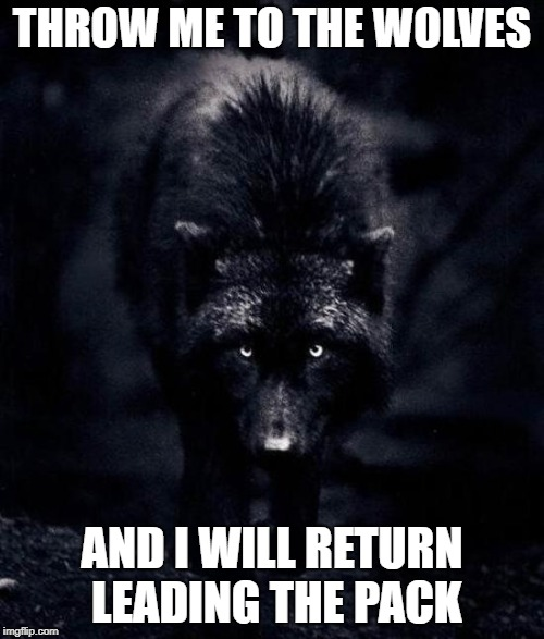 Black Wolf | THROW ME TO THE WOLVES AND I WILL RETURN LEADING THE PACK | image tagged in black wolf | made w/ Imgflip meme maker