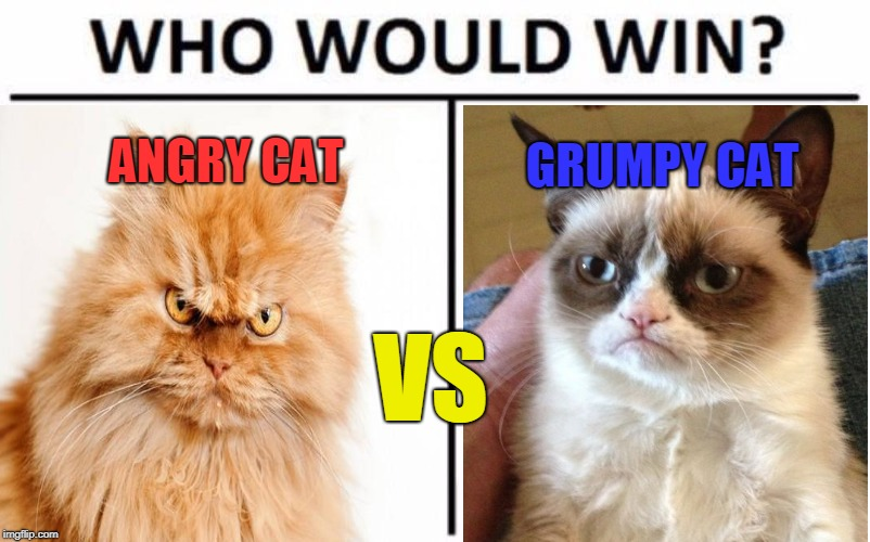 Get ready For the greatest battle OF. ALL. TIME. It's Angry Cat vs Grumpy Cat in the mother of all showdowns! Vote in comments!  | VS GRUMPY CAT ANGRY CAT | image tagged in epic battle,cat fight,angry cat vs grumpy cat,memes,place your bets,who do you choose | made w/ Imgflip meme maker