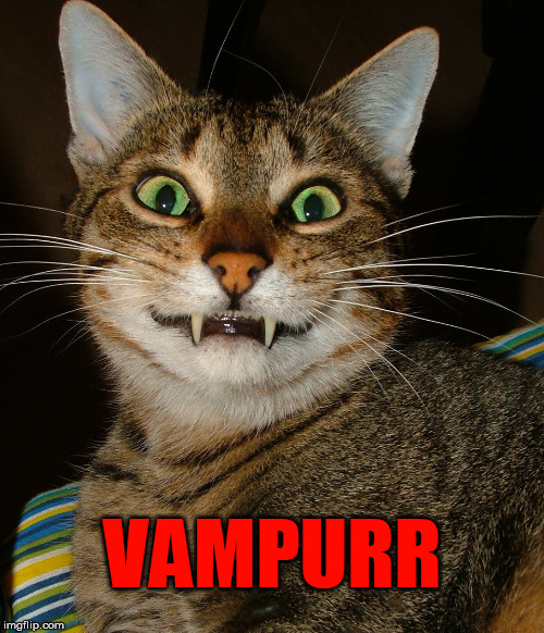 VAMPURR | made w/ Imgflip meme maker