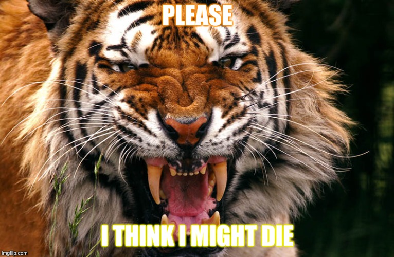 Tiger | PLEASE I THINK I MIGHT DIE | image tagged in tiger,animals | made w/ Imgflip meme maker