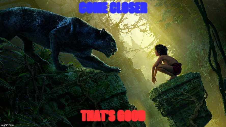 Jungle Book |  COME CLOSER; THAT'S GOOD | image tagged in black panther,seth rich | made w/ Imgflip meme maker