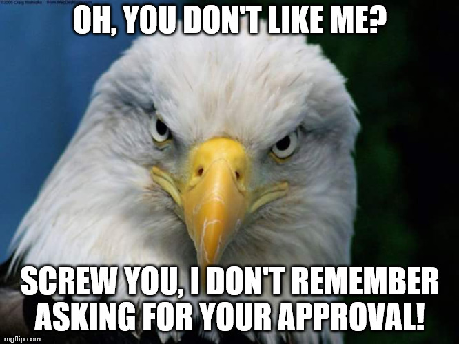 American Bald Eagle | OH, YOU DON'T LIKE ME? SCREW YOU, I DON'T REMEMBER ASKING FOR YOUR APPROVAL! | image tagged in american bald eagle | made w/ Imgflip meme maker