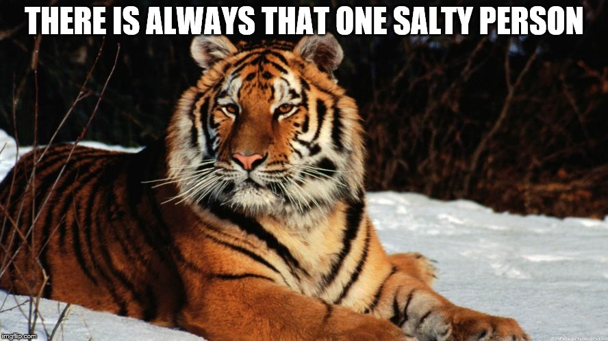 That Friend That Is Just Salty Out Of Nowhere | THERE IS ALWAYS THAT ONE SALTY PERSON | image tagged in tiger,salty,friends | made w/ Imgflip meme maker