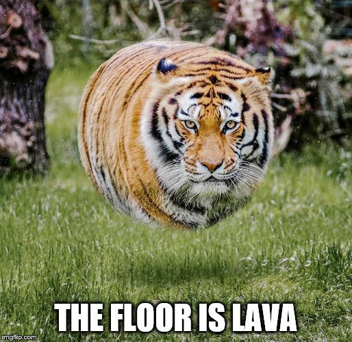 There Is That One Person That Takes It To The Extreme | THE FLOOR IS LAVA | image tagged in tiger,the floor is lava,people | made w/ Imgflip meme maker