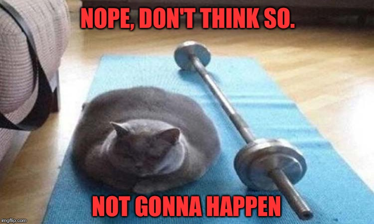 Maybe tomorrow. | NOPE, DON'T THINK SO. NOT GONNA HAPPEN | image tagged in cat,gym weights,exercise,memes,funny | made w/ Imgflip meme maker