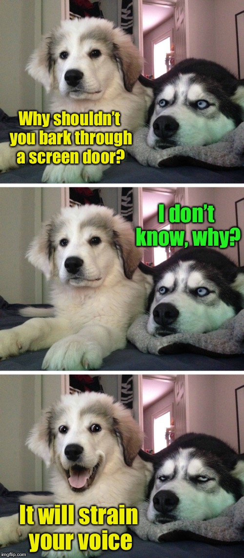 Bad pun dogs | Why shouldn't you bark through a screen door? It will strain your voice I don't know, why? | image tagged in bad pun dogs,memes,bad pun,strainer,voice,barking | made w/ Imgflip meme maker