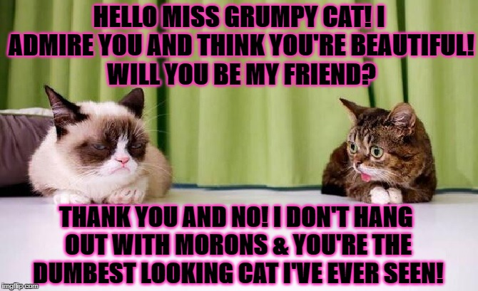 HELLO MISS GRUMPY CAT! I ADMIRE YOU AND THINK YOU'RE BEAUTIFUL! WILL YOU BE MY FRIEND? THANK YOU AND NO! I DON'T HANG OUT WITH MORONS & YOU' | image tagged in grumpy and lil bub | made w/ Imgflip meme maker