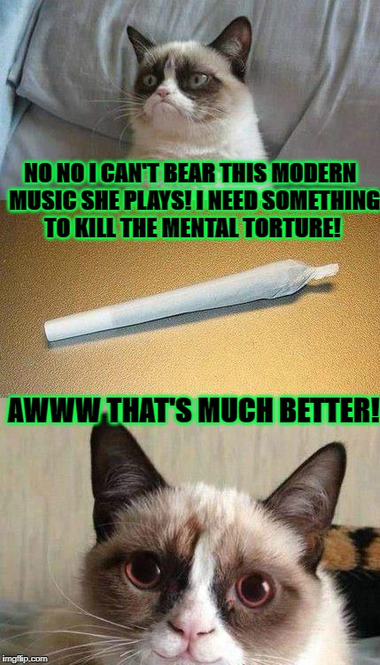 NO NO I CAN'T BEAR THIS MODERN  MUSIC SHE PLAYS! I NEED SOMETHING TO KILL THE MENTAL TORTURE! AWWW THAT'S MUCH BETTER! | image tagged in stoned grumpy cat | made w/ Imgflip meme maker
