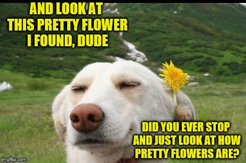 AND LOOK AT THIS PRETTY FLOWER I FOUND, DUDE DID YOU EVER STOP AND JUST LOOK AT HOW PRETTY FLOWERS ARE? | made w/ Imgflip meme maker