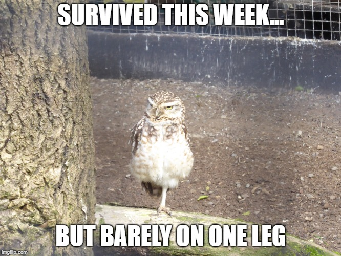SURVIVED THIS WEEK... BUT BARELY ON ONE LEG | image tagged in memes | made w/ Imgflip meme maker