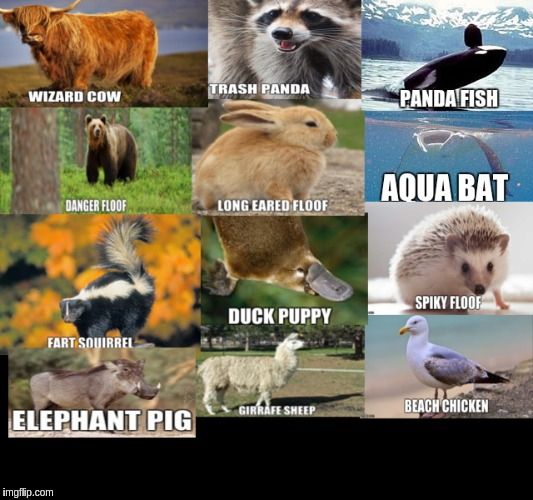 renamed animals | image tagged in animals,memes | made w/ Imgflip meme maker
