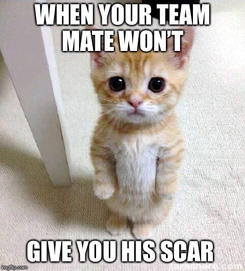 Cute Cat Meme | WHEN YOUR TEAM MATE WON'T GIVE YOU HIS SCAR | image tagged in memes,cute cat | made w/ Imgflip meme maker