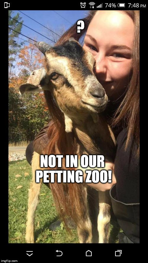 ? NOT IN OUR PETTING ZOO! | image tagged in goat girl | made w/ Imgflip meme maker