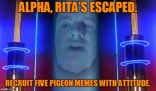 ALPHA, RITA'S ESCAPED. RECRUIT FIVE PIGEON MEMES WITH ATTITUDE. | made w/ Imgflip meme maker