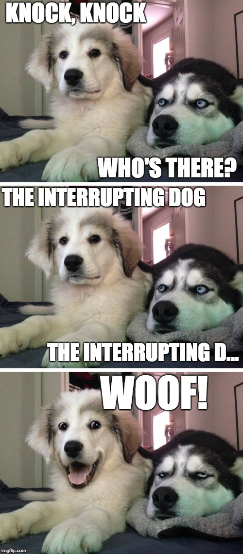 The Interrupting Dog | KNOCK, KNOCK WHO'S THERE? THE INTERRUPTING DOG THE INTERRUPTING D... WOOF! | image tagged in bad pun dogs,woof,memes,funny,dogs,bad joke | made w/ Imgflip meme maker