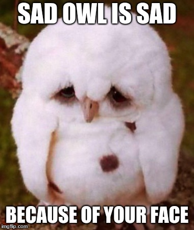 Sad Owl Meme | SAD OWL IS SAD BECAUSE OF YOUR FACE | image tagged in sad owl,funny memes,animal memes | made w/ Imgflip meme maker